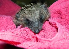 Animal lovers are appealing for towels to help them save creatures brought in to a wildlife hospital.