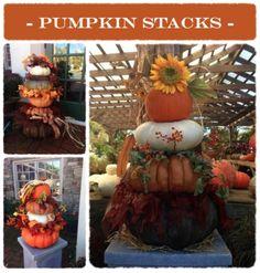 Pumpkin Stacks #MatlackFlorist