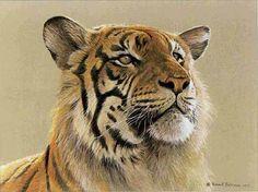 Robert Bateman - Tiger Portrait