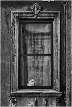 .cat in the window - beautiful