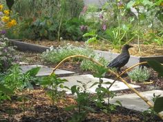 How to Get Rid of Crows in the Garden