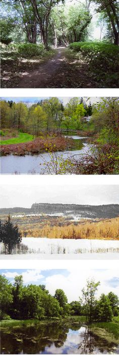 Nyquist-Harcourt Wildlife Sanctuary | Nature Walk in New Paltz | Hike in New Paltz