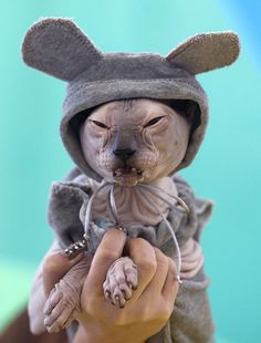 Sphynx cat by mihai_be, via Flickr   ...........click here to find out more     http://googydog.com