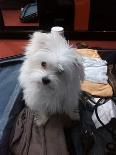 in my suitcase just comming home but maybe he wants to travel see the world? :) funny one
