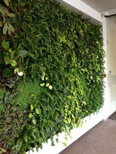 een groene muur zorgt voor verbeterde luchtkwaliteit