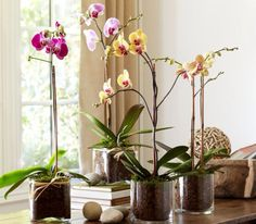 Plants Wanted: Orchids My faves. http://www.potterybarn.com/m/shop/accessories-decor/live-plants-faux-flowers/live-plants/