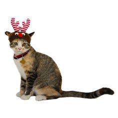 Whisker City™ Pet Holiday Santa Cat Hat | Clothes & Costumes ...