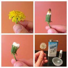 dandelion resin light