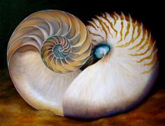 Nautilus Heart oil painting by Diane Rieger  I love Nature's mathematical sequences!