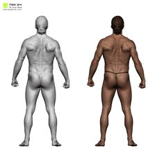 6 x Range of movement scans, never get muscle deformation wrong again! perfect for rigging and anatomy study.  Dataset includes ::  ::6 x High resolution Zbrush models, compatible with Zbrush 4R5 and above  :: 6 x10,000 x 10,000 colour maps  :: 6 x Decimated OBJs (750K triangles)