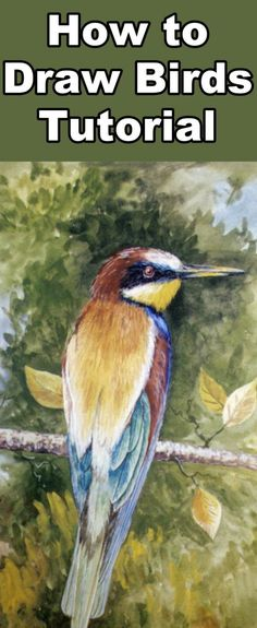How to Draw a European Bee-Eater in Pastel - Online Art Lessons Pastel Drawing, Pastel Art, Painting & Drawing, Drawing Lessons, Drawing Techniques, Art Lessons, Drawing Ideas, Bird Drawings, Animal Drawings