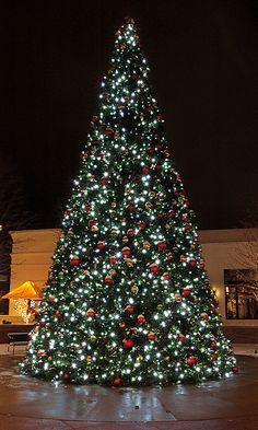 Polaris Tree in Orange, Ohio Merry Little Christmas, Christmas Love, Beautiful Christmas, Christmas Trees, Christmas Holidays, Christmas Decorations, Outdoor Xmas Tree, Christmas Light Displays, Christmas Events