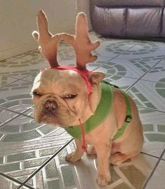 Christmas, even the dogs all change