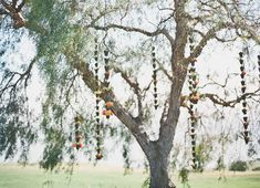 hanging flowers from trees