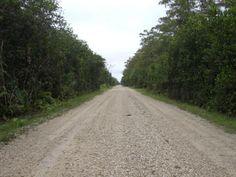 Die Loop Road mitten durch die Everglades