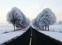 photo #snow #christmas #winter #december #outdoor #photooftheday #followback #F4F #outdoors