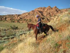 Topline exercises for the trail/endurance horse