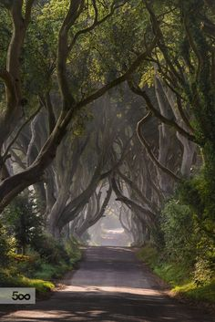 ~~I Long to Return to the Dark Hedges | Bregagh Road, Ballymoney, Ireland |by Andy Gibson~~
