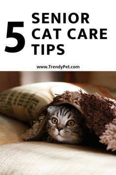 Do you ever have random questions about your cats? Why does my cat does this? Todays question is why does my cat drool? Drooling in cats. Cat Toilet Training, Cat Care Tips, Pet Feeder, Healthy Pets, Cat Health, Health Care, Cat Gifts, Cat Toys