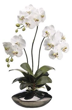 Phalaenopsis floral | Havertys Furniture
