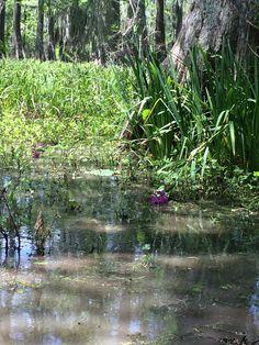 Lake Martin, Breaux Bridge Breaux Bridge, Louisiana Homes, Old Pictures, Plants, Beautiful, Antique Photos, Old Photos, Flora, Plant