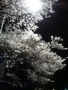 Now, Spring comes to Seoul