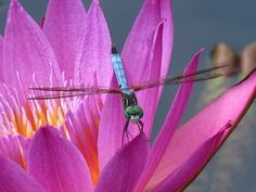 dragonfly   Sandy Rowley reviews http://www.merchantcircle.com/business/Mega.Star.Media.Inc.Reno.NV.775-850-5821