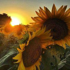 Picture taken by Kim Horgan in Kansas. Beautiful sunrise
