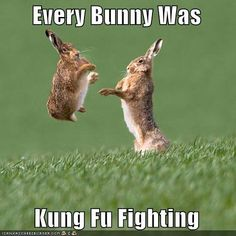 You know the song everybody was kung fu fighting? Well know every BUNNY was kung fu fighting! Humor Animal, Funny Animal Memes, Cute Funny Animals, Animal Quotes, Funny Animal Pictures, Funny Memes, Funny Easter Memes, Animal Puns, Happy Easter Meme