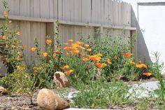 california native garden California Native Garden, Aliso Viejo, Pinterest Garden, Native Gardens, Water Wise, Manzanita, Drought Tolerant, Sustainable Design, Yard Ideas