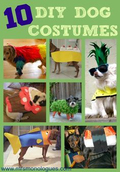 10 DIY Dog Costumes #campbowwow #costumeideas #dogs