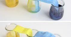 Vam repetir l'experiment , aquest cop amb colorant alimentari. Durant la tarda, l'aigua tenyida de blau i l'aigua tenyida de groc van anar a...