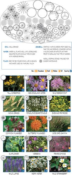 """Sun & Dry Native Garden"" - Great ideas and layouts for planting native species in your garden."