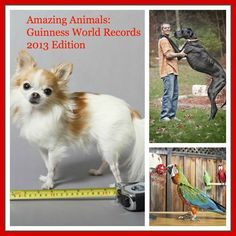 Phenomenal animal feats in guinness world records 2013 edition adorable pups pinterest - Smallest cat in the world guinness ...