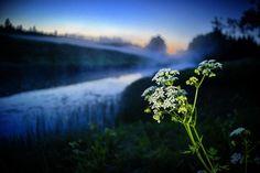 Dandelion, Mountains, Nature, Flowers, Plants, Travel, Naturaleza, Viajes, Dandelions