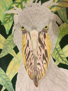 Shoebill stork by Denise Oxland, Faber Castell coloured pencils