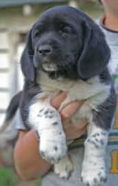Basset Hound Mix... i want him so much, his adorableness is overwhelming! :)