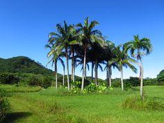 Ishigaki, Golf Courses, Plants, Plant, Planets