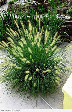 Backyard Plants, Garden Plants, Creative Landscape, Landscape Design, Beautiful Gardens, Perennials, Home And Garden, Herbs, House Design