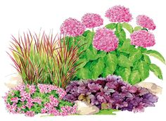 Association Hortensia, graminées, et heuchères. Lovely contrasts between plants but shades of pinks and greens tie them to one another. Bird Bath Garden, Garden Art, Garden Plants, Garden Design, Vegetable Garden, Full Sun Perennials, Creative Landscape, Landscaping With Rocks, Shade Garden