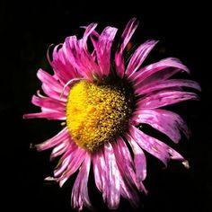 Check out my website! My Website, Plants, Photography, Photograph, Photography Business, Flora, Photoshoot, Fotografie, Fotografia