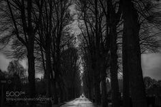 Central Cemetery Vienna road by StefanRadi