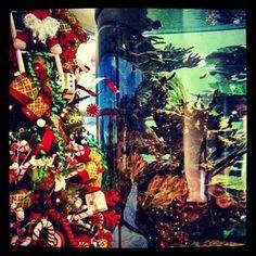 Tropical Christmas in Belize. Aquarium at Tropic Air Terminal San Pedro