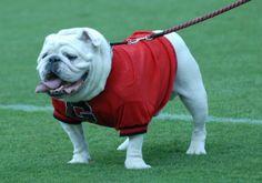 Georgia Bulldogs mascot Uga VI, 2006 (UAB)