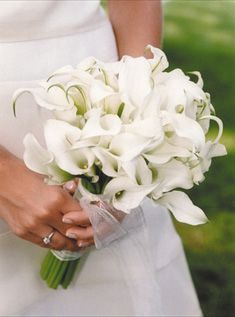 white calla lilies      Simple white calla lilies look modern with their touches of greens on the ends.