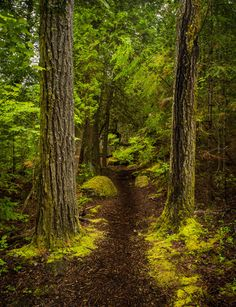 Enchanted Forest Photo by Jim Davis