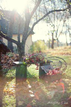 Mmm.. herfstzon, buiten zijn, lekker verse lucht. Lekker warm zijn van het werken, bezig zijn. De geur van natte herfstbladeren, appels. Vuile handen, aarde.. - -  Apple Time | Loreta I Flickr - Photo Sharing!