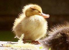 my Duckling