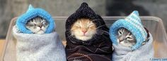 bundled up kittens facebook cover