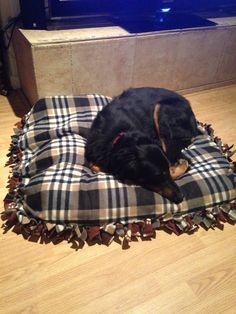No Sew Dog Bed! $30 and super easy! Two pieces of flannel fabric (48 inches by 36 inches), tie 3 sides together like a no sew blanket, stuff with a comforter from GoodWill, and tie up the last side. The dog loves it!